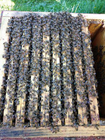 Rodziny pszczele, Odkłady pszczele 5 ramkowe.