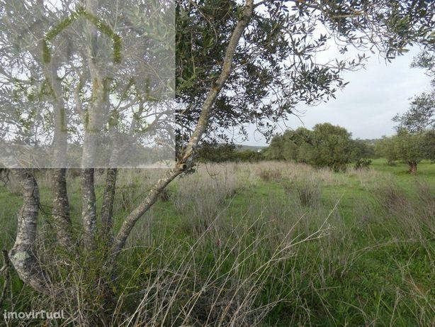 Terreno Rústico, Vista Serra Algarvia, Azinhal e Amendoeira