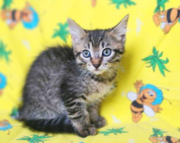 ласковая малышка-кошка Май ищет любящий дом, котёнок, 4 месяца
