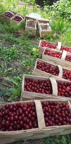 Wiśnie prosto z sadu