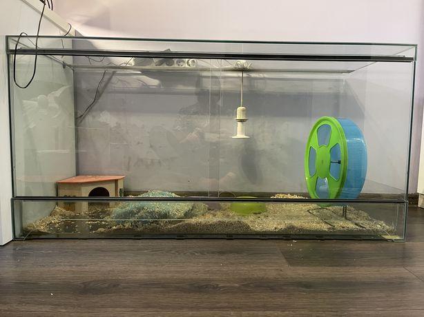 Terrarium 120 cm jeż pigmejski