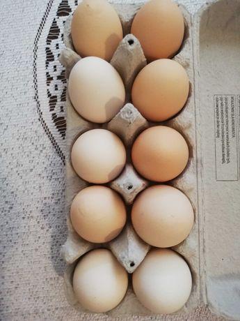 Jaja wiejskie z wolnego wybiegu