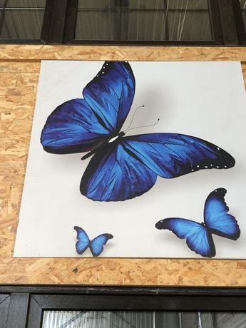 Motyl plakat na sztywnej ramie obraz