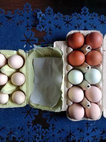 Jaja lęgowe marans, araucana, green shell,austrolorp,sebrytki,sassex