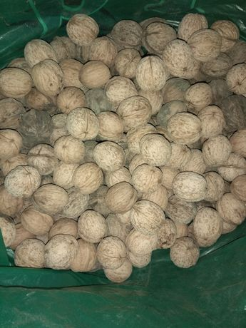 Грецкий орех ОБМЕН