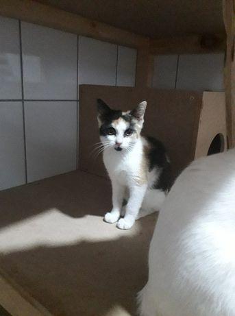 Adoptuj kociaka!!! Słodziutka kotka czeka na domek!!!