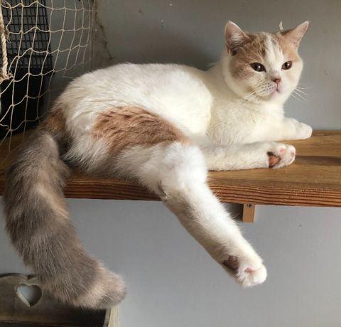 YUTARO , 11 miesięczna kotka , FPL, CCVictoria Gdańsk