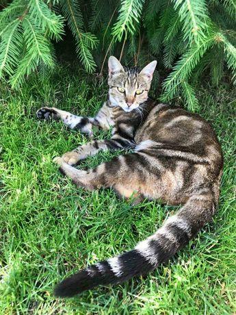 Пропала кошка, улица Солнечная