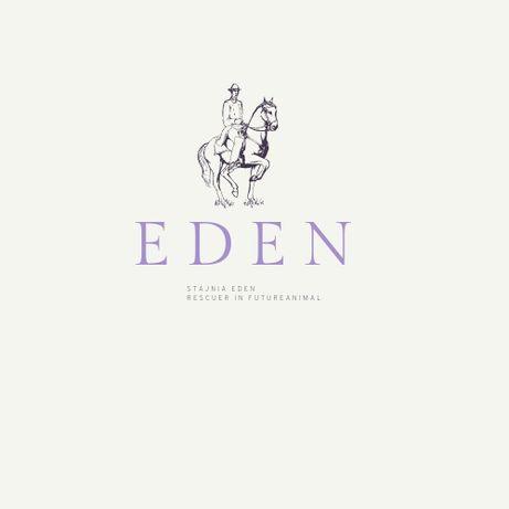Stajnia EDEN - lonża, teren, dzierżawa konia