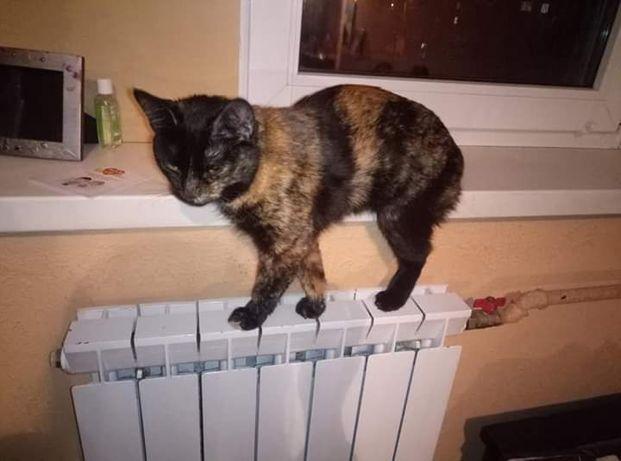 Пропала (потерялась) кошка Дарницкий р-н