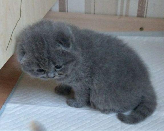Найгарніші кошенятка