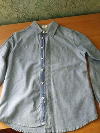 koszula coccodrillo rozm.146