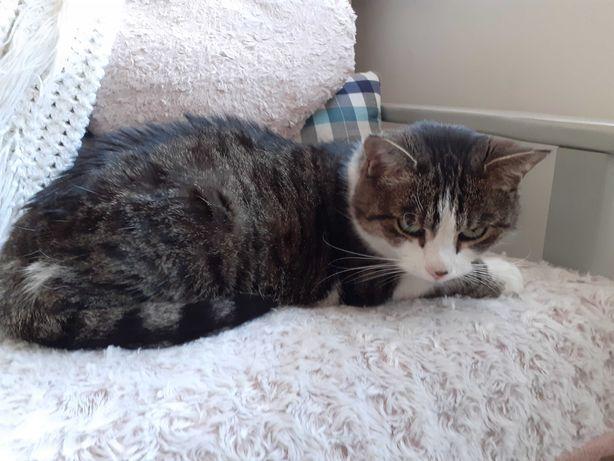 Wysterylizowana kotka szuka nowego domu