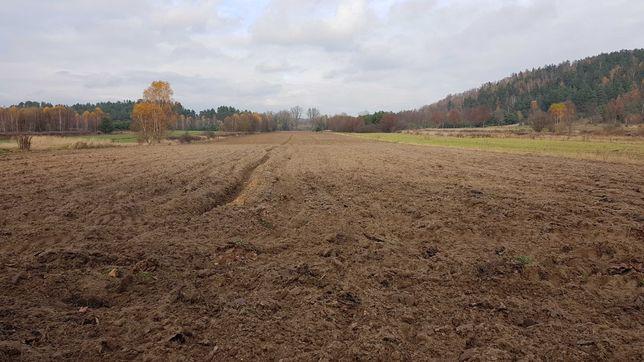 Wydzierżawie ziemie rolną pod uprawe