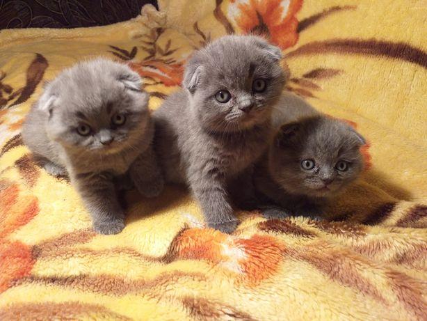 Чарівні кошенятка