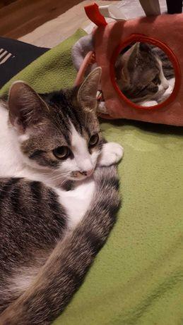 Zagineła kotka os. Wilczak , Wincentego Pola