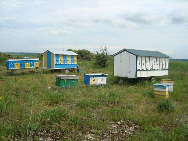 Бджолопавільйон, пасіка, бджоли