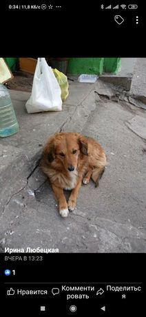 Пропала собака Осипок, Бабурка...