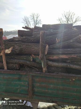 Drewno dębowe         .