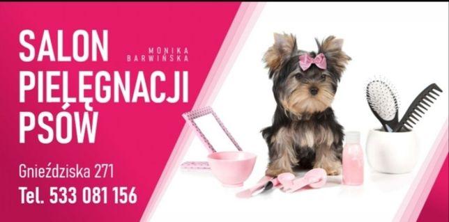 Salon pielęgnacji psów