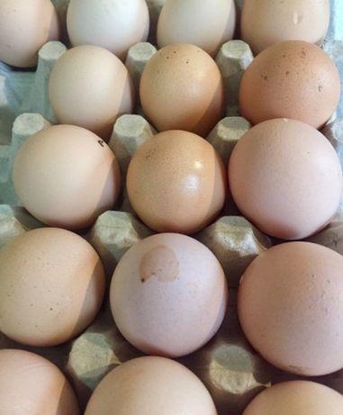 Świeże jajka ze wsi