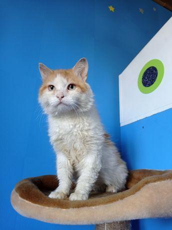 Очаровательный рыже-белый котик
