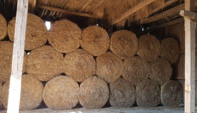 Słoma pszenna 120x150 cm - odbiór własny w okolicach Konecka