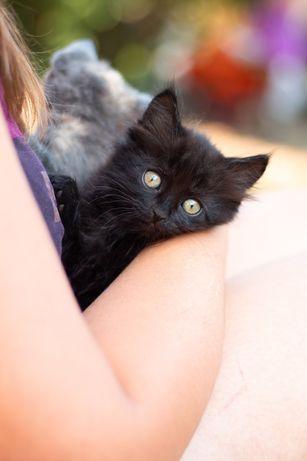 Котик пухнастий безкоштовно