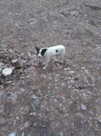 Молоденькая собачка маленького размера