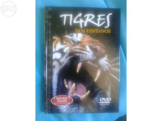 DVD Documentário Tigres dos Pântanos