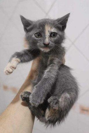 Gatos bebés para adopção