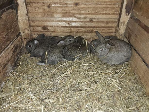Продаю кроликів.