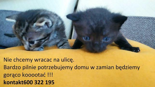 Pilnie potrzebna pomoc w znalezieniu domu dla kotów