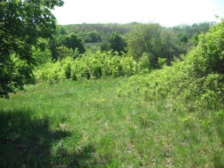 Приватизированный земельный участок в живописной местности