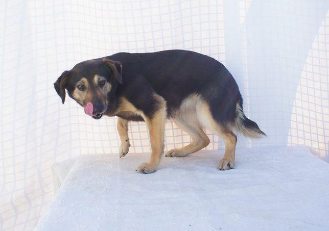 Misha - cadela de porte médio