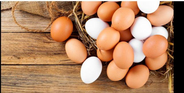Jajka wiejski od szczęśliwych kur