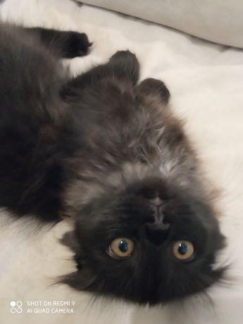 Котята-мальчики от вислоухой кошечки