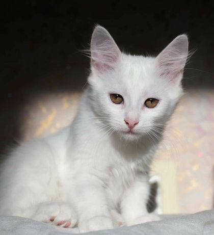 Белый котёнок+рыжий котёнок