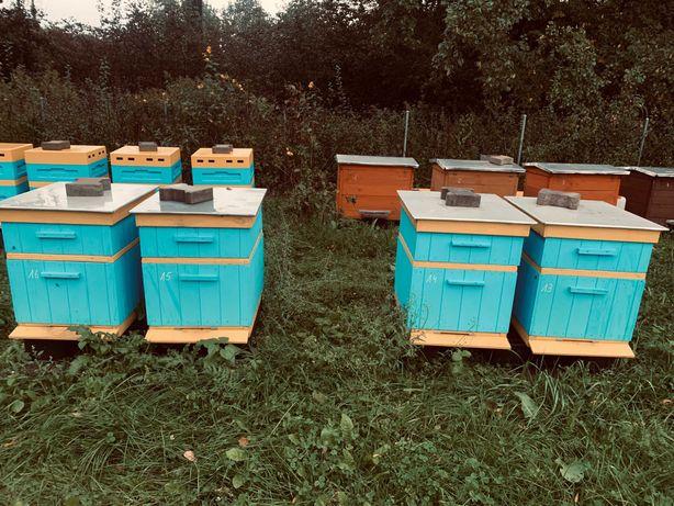 Rodziny pszczele , odkłady na ramkach warszawska poszerzana , dadant ,