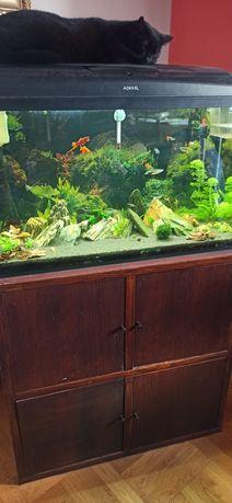 Akwarium 126l z szafką i wyposażeniem