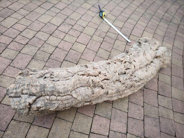 Korek naturalny legwan pająk terrarium