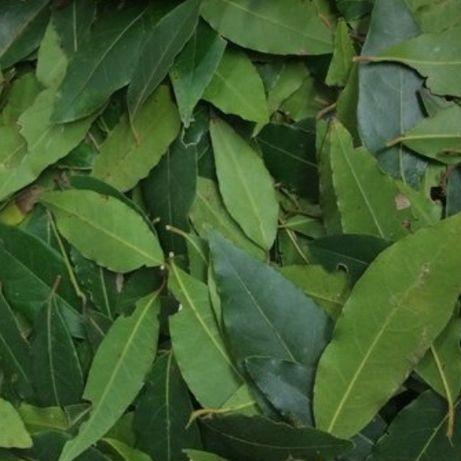 Folhas Loureiro biológico
