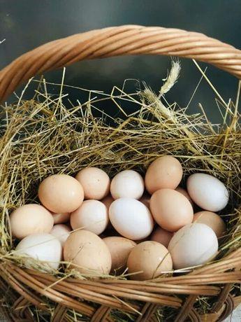 Wiejskie jajka.
