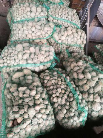 Ziemniaki odpadowe, paszowe, duże ilości, transport
