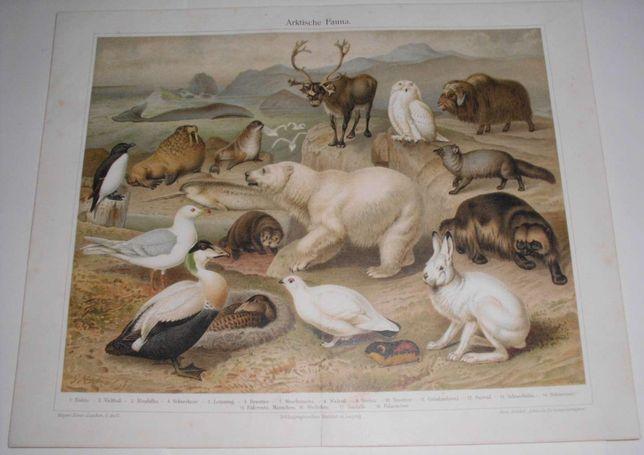 Zwierzęta oryginalne XIX w. chromlitografie do dekoracji wnętrza