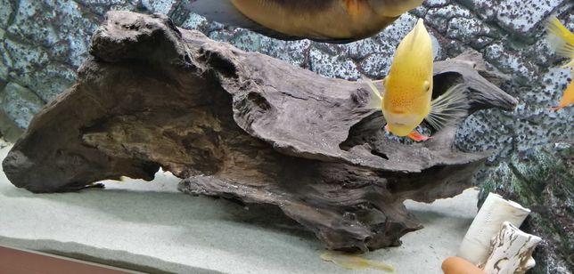 Duży korzeń do akwarium spreparowany, nie barwi wody