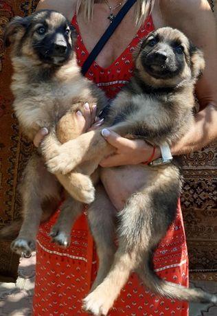 щенки в добрые руки, район Беляевка