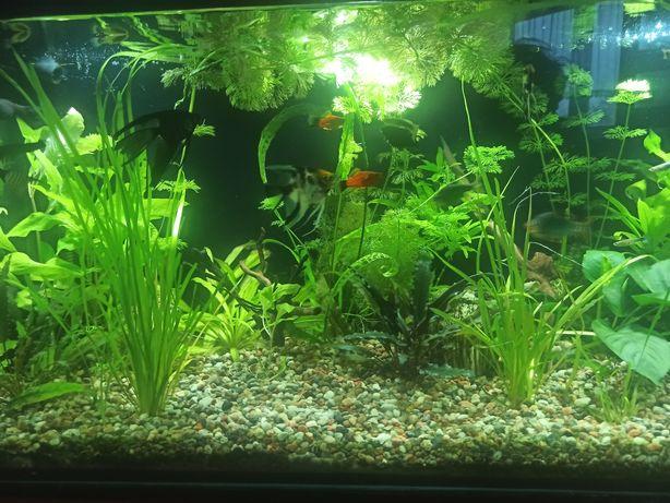 Rośliny akwariowe zamienię lub sprzedam