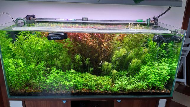 Spory zestaw roślin akwariowych, Rośliny Akwariowe