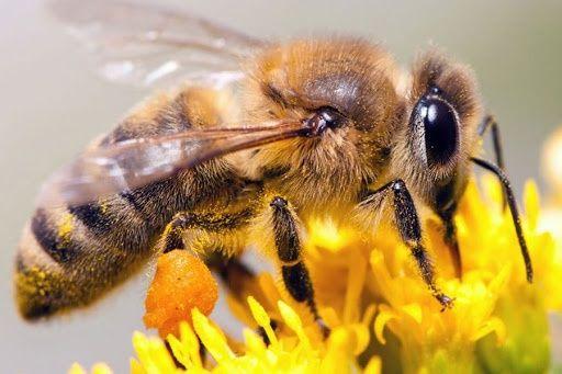 Продам бджолопакети  (пчелопакеты 2021)